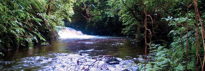 Jungle runwater