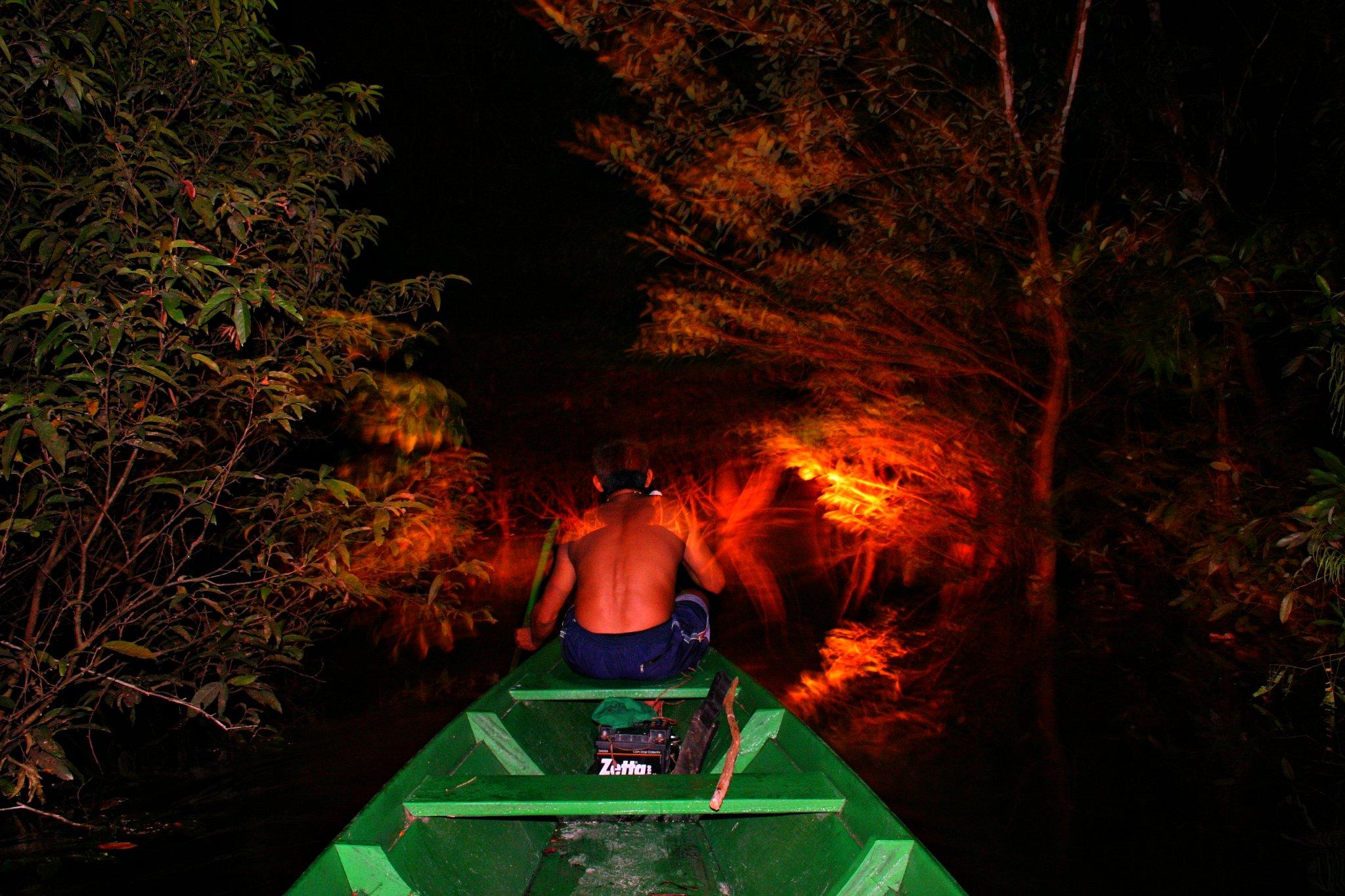 night in jungle