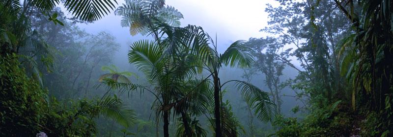 Jungle Rain